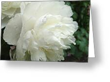 White Peony After Rain Greeting Card