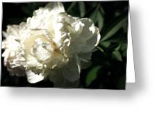 White Peony In Spring Greeting Card