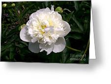 White Peony Watercolor Effect Greeting Card