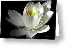 White Petals Aquatic Bloom Greeting Card by Julie Palencia