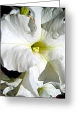 White Petunia Greeting Card