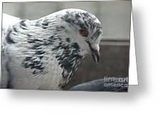 White Pigeon Greeting Card