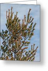 White Pine In Spring Greeting Card