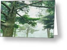 White Pine Trees, Wisconsin, Usa Greeting Card