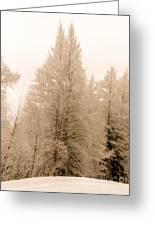 White Pines Greeting Card