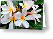 White Plumeria - 2 Greeting Card