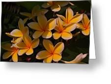 White Plumeria Greeting Card