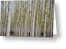 White Poles IIi Greeting Card