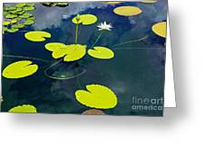 White Pond Lily Greeting Card