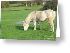 White Pony On The Moors Greeting Card