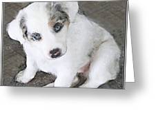 White Puppy Cuteness  Greeting Card