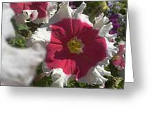 White-red Petunia Greeting Card