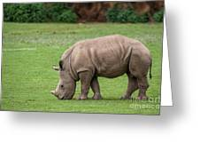 White Rhino 12 Greeting Card