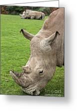 White Rhino 15 Greeting Card