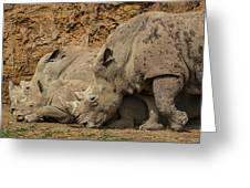 White Rhino 2 Greeting Card