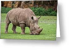 White Rhino 5 Greeting Card