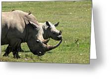 White Rhino Mother And Calf Greeting Card