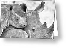 White Rhino With Calf Greeting Card