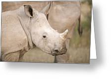 White Rhinoceros Calf Greeting Card