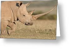 White Rhinoceros Kenya Greeting Card