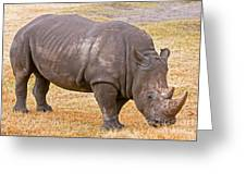 White Rhinoceros Greeting Card