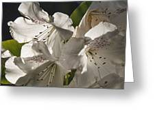White Rhododendron B Greeting Card