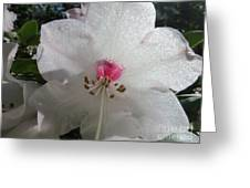 White Rhododendron Blossom Greeting Card