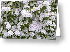 White Rhododendron Blossoms Greeting Card