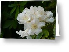White Rhododendron With Tears Greeting Card