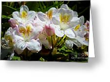 White Rhododendron In Sunlight Greeting Card