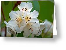 White Rhododendrons Greeting Card