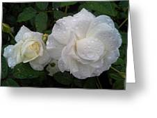 White Rose And Raindrops Greeting Card