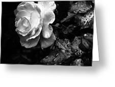 White Rose Full Bloom Greeting Card