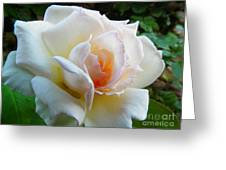 White Rose Oleo Greeting Card