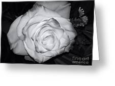 White Rose Passion Impression Greeting Card