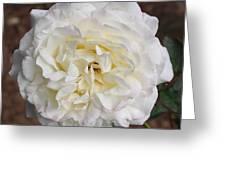 White Rose Square Greeting Card