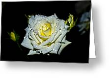 White Rose With Dew Greeting Card