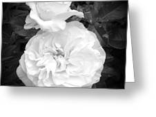 White Rose You Are Heavenly Greeting Card
