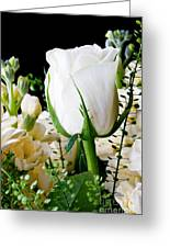 White Roses Close Up Greeting Card