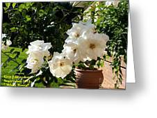White Roses H A Greeting Card