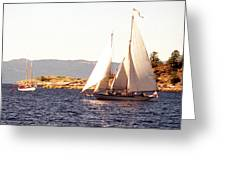 White Sails In The Sunset Greeting Card