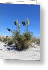 White Sands Dune With Soap Yucca Greeting Card