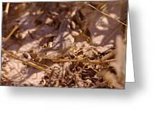 White Sands Lizard Greeting Card