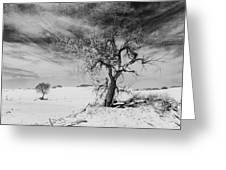 White Sands National Monument 1 Light Mono Greeting Card