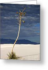 White Sands National Monument 2 White Sands New Mexico Greeting Card