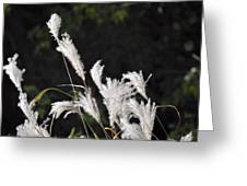White Seed Greeting Card