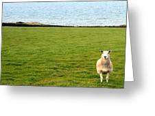 White Sheep In A Green Field By The Sea Greeting Card