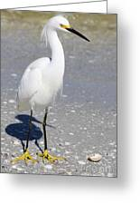 White Silky Feathers Greeting Card
