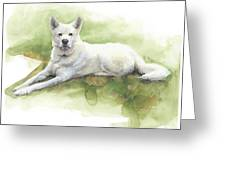 White Sled Dog Lying On Grass Watercolor Portrait Greeting Card