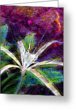White Spider Flower On Orange And Plum - Vertical Greeting Card